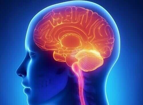 أجزاء المخ المشاركة في نظام المكافأة