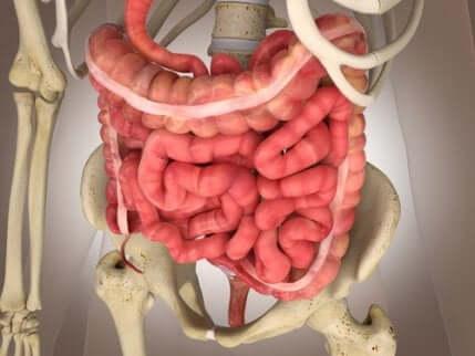 الانسداد المعوي و ألم البطن