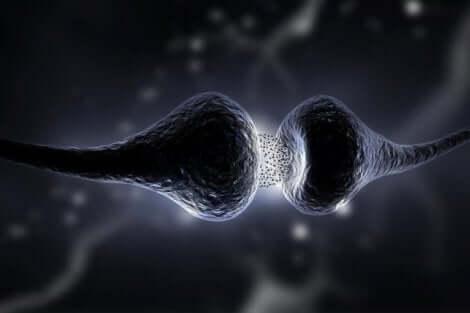 كيفية عمل لدونة المخ العصبية