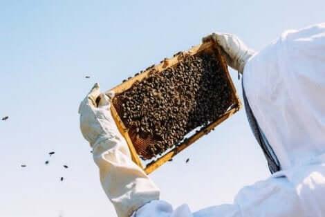خصائص غذاء ملكات النحل