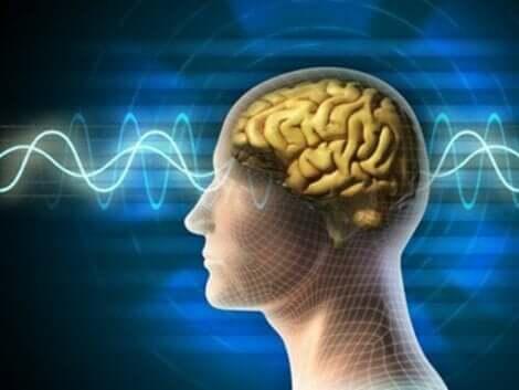 نشاط المخ