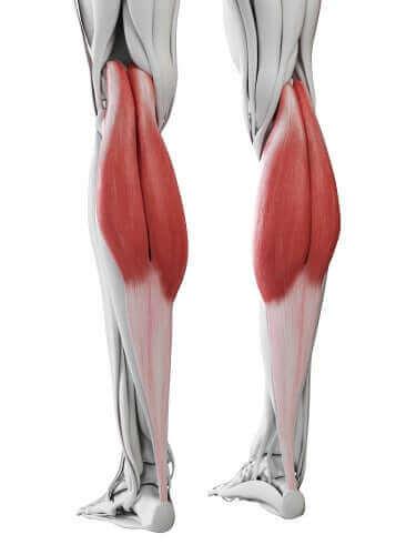 صورة توضيحية لعضلات الساق الخلفية