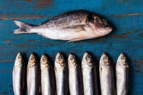 الأسماك الدهنية مرتين في الأسبوع
