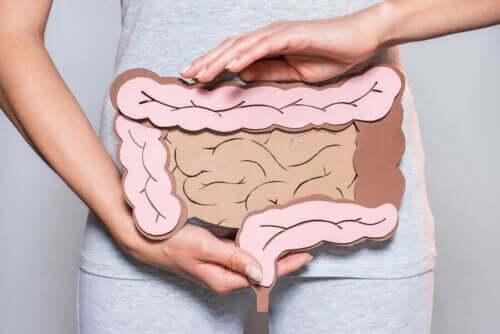 الأمعاء وإنتاج الإنزيمات