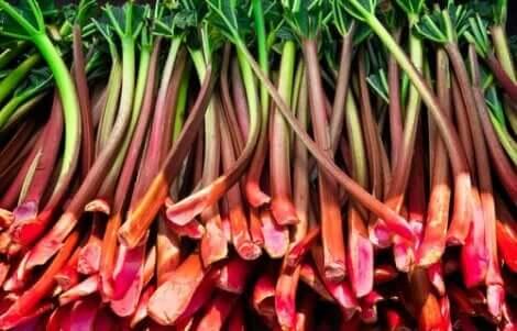 فوائد راوند الحدائق الغذائية