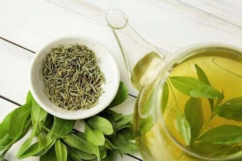 الشاي الأخضر - اكتشف معنا فوائده الصحية الرائعة