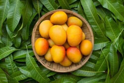 أوراق شجرة المانجو - اكتشف معنا 6 فوائد صحية لها