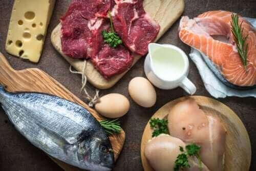 ما سبب الأهمية القصوى لاستهلاك البروتين؟
