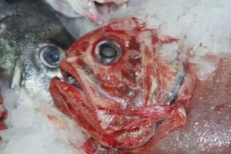 الزئبق في الأسماك