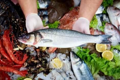 تأثيرات الزئبق في الأسماك