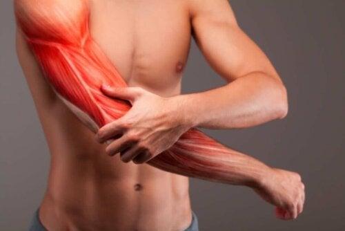عضلات الساعد