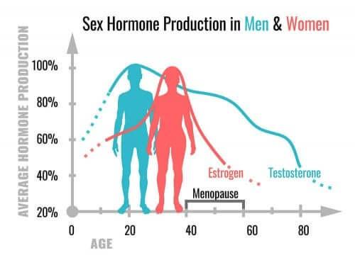 ما الذي تقوم به الهرمونات الجنسية في أجسامنا؟