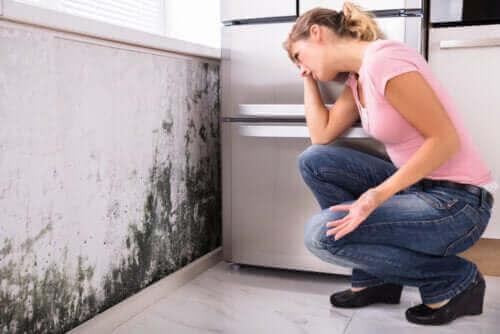 هل يمكن أن يقود العفن في المنزل إلى مشاكل صحية؟