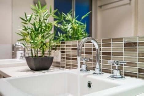 أفضل أنواع النباتات لحمامك