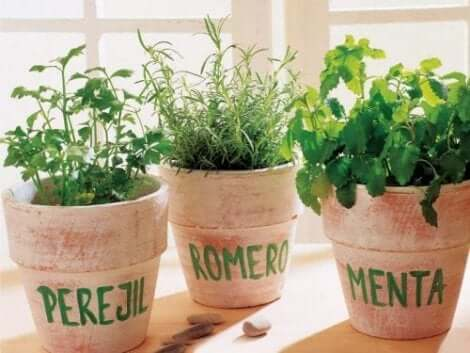 تهوية الأعشاب الطازجة