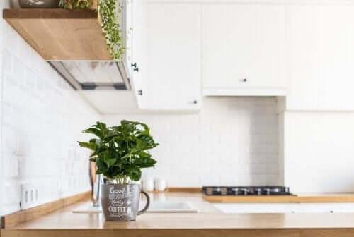 كيف تزرع الأعشاب الطازجة في مطبخك