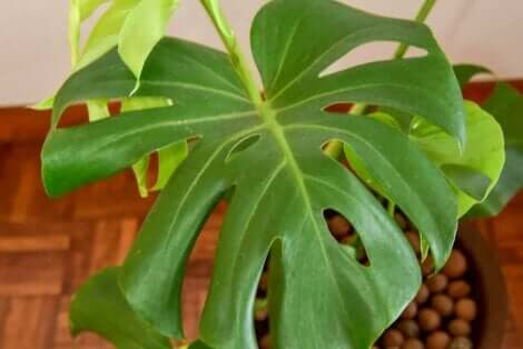 نباتات المساحات الداخلية