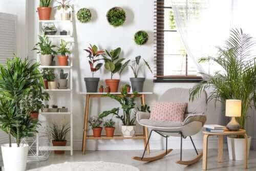 نباتات المساحات الداخلية القوية التي لا تتطلب الكثير من الرعاية