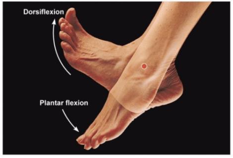 مسببات التهاب الوتر