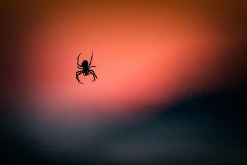 سم العنكبوت قد يساعد في تقليل تلف الدماغ