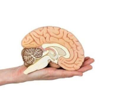 التعامل مع المخ خلال تقنية التشريح العصبي