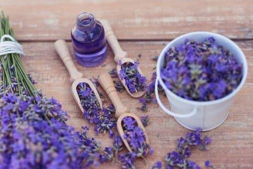 5 وسائل لاستخدام نبات اللافندر كعلاج مهدئ